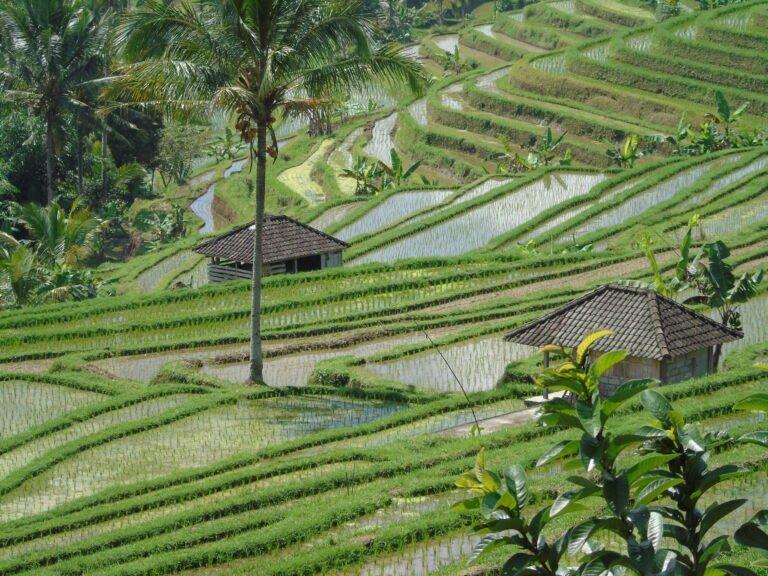 Bali: cosa vedere sull'Isola degli Dei