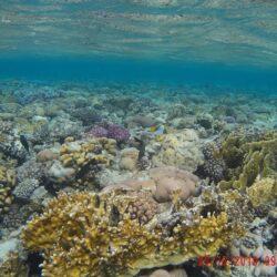 Ras Mohammed: escursione alla laguna blu di Sharm el-Sheikh